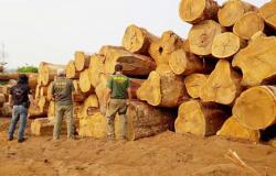 Ibama paralisa autorização de retirada de madeira em MT e no PA