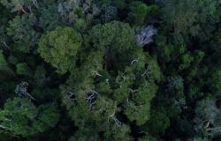 Força-tarefa da AGU vai atuar por mais um ano em defesa da Amazônia