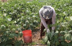 ICV e Sicredi firmam parceria para apoiar agricultura familiar na Amazônia mato-grossense