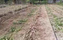 Propriedades atingidas por pulverização de agrotóxicos em Paranaíta passam por perícia