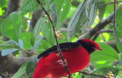 Empresários fotografam pássaros durante passeios em Aripuanã e encontram espécie rara