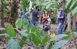 Agricultor de Alta Floresta se destaca com implantação do sistemas agroflorestais biodiversos