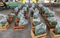 Apiacás: Secretaria de Agricultura em parceria com Assistência Social distribuíram mais de 205 Cestas Verdes
