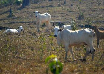 MT-Leilões de gado e veículos devem arrecadar mais de R$ 3 milhões