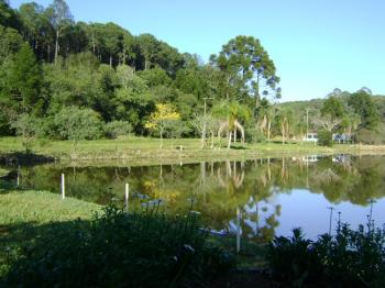 A Floresta Nacional de Chapecó (PR) foi incluída no PPI - Foto: ICMBio