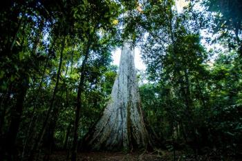 MT fecha mês de abril com redução de 18% nos alertas de desmatamento