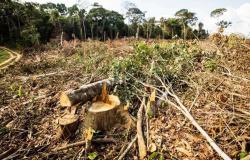 Abril tem maior o desmatamento na Amazônia; MT é o 3º no ranking