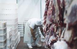 MPF-MT aciona frigorífico de Alta Floresta por comercialização produtos bovinos de fazendas embargadas