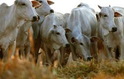 Sinop e Embrapa firmam parceria para investimentos no agronegócio