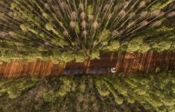Indústria florestal deve investir R$ 53,5 bilhões até 2024