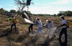 Corpo de Bombeiros firma parceria com prefeituras para criação de brigadas mistas de combate aos incêndios florestai