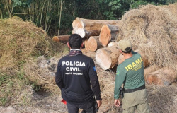 Polícia Civil flagra madeireiras operando irregularmente e apreende 600 metros cúbicos de madeira
