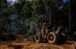 Governador lança mais uma etapa da Operação Amazônia contra crimes ambientais