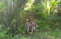 Alta Floresta: Homem supostamente desaparecido em mata é localizado