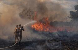 Nova Monte Verde: Corpo de Bombeiros e município encaminham parceria na criação de brigada de incêndios Florestais