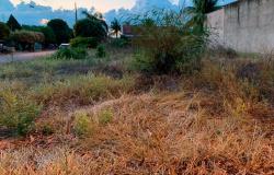 Secretaria já aplicou mais de R$ 68,8 mil em multas em proprietário com terrenos sujos em Sinop