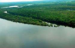 Esalq orienta estudo inédito sobre a floresta amazônica