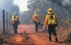 Secretaria de Meio Ambiente de Alta Floresta abre seletivo para contratar brigadistas
