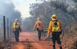 Prefeitura de Alta Floresta retifica Processo Seletivo de brigadistas