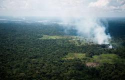 INPE registra pela quarta vez consecutiva recorde de desmatamento na Amazônia