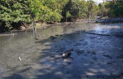 Empresa é multada em R$ 1 milhão por despejar resíduos no Rio em zona rural de Sorriso