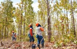 Alta Floresta e outras 3 prefeituras de Mato Grosso contratam mão de obra de recuperandos