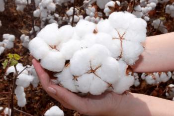 """O """"Estado da Arte"""" do algodão brasileiro"""