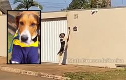 Cachorro que toca campainha para entrar em casa se chama Faísca e surpreendeu até a família