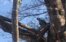 Aves vindas do Ceará são soltas na região de Tangará da Serra