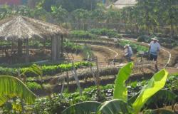 Escolas de Alta Floresta, Carlinda e Paranaíta são selecionadas para implementar projeto Horta Pedagógica