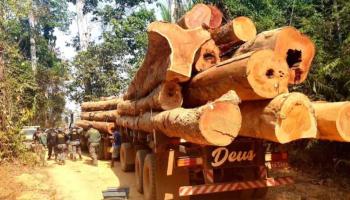 MT: PF, Força Nacional e Ibama realizam ação de repressão ao desmatamento em Terra Indígena
