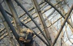 Fake News: Imagens de animais mortos em incêndios florestais não são em Mato Grosso