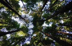 Iguá lança edital de R$ 1,1 milhão para projetos socioambientais