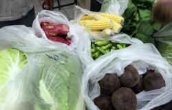 Alta Floresta: Secretaria de Educação convida produtores locais para reunião sobre aquisição de produtos para alimentação escolar