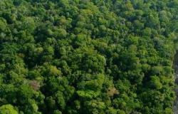 Governo do Pará fará ajuste no projeto de Criação de Unidade de Conservação