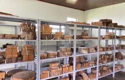 Xiloteca do Campus da UNEMAT de Alta Floresta conta com exemplares que auxiliam em pesquisas e estudos